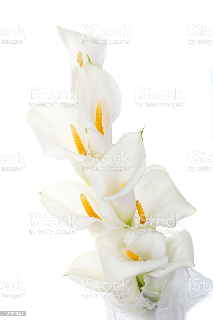 Calla lilies in bouquet royalty-free stock photo