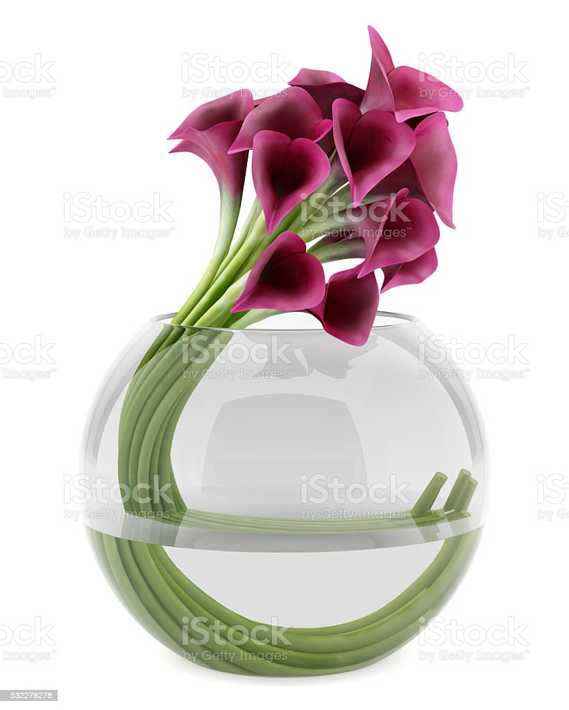 calla lilies in glass vase isolated on white background stock photo