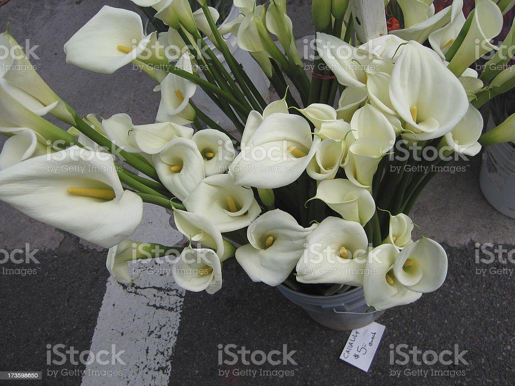 Calla Lilies royalty-free stock photo