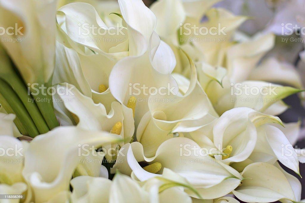 Calla Lillies stock photo