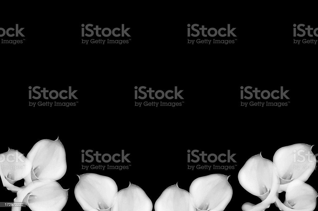 Calla Lily Artistic Background Desaturated stock photo