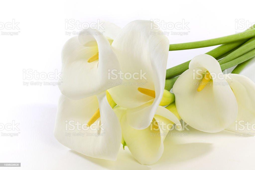 Calla Lily Bouquet stock photo