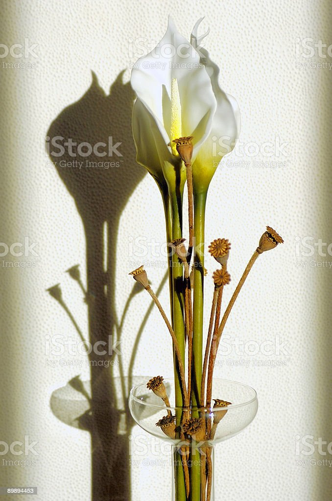 Callas flower royalty-free stock photo