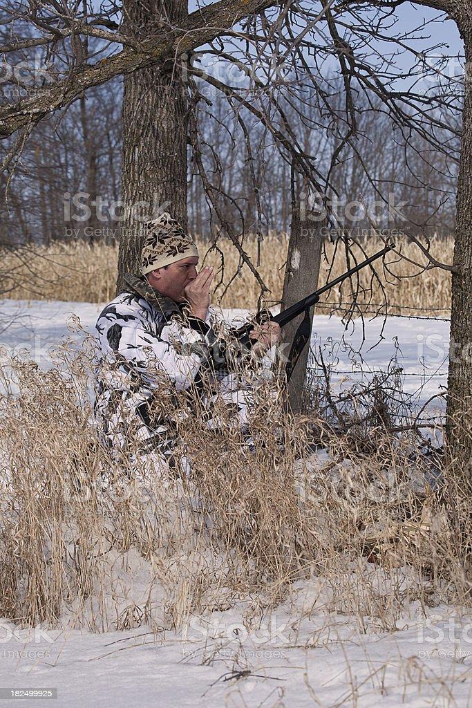 Calling Coyote stock photo
