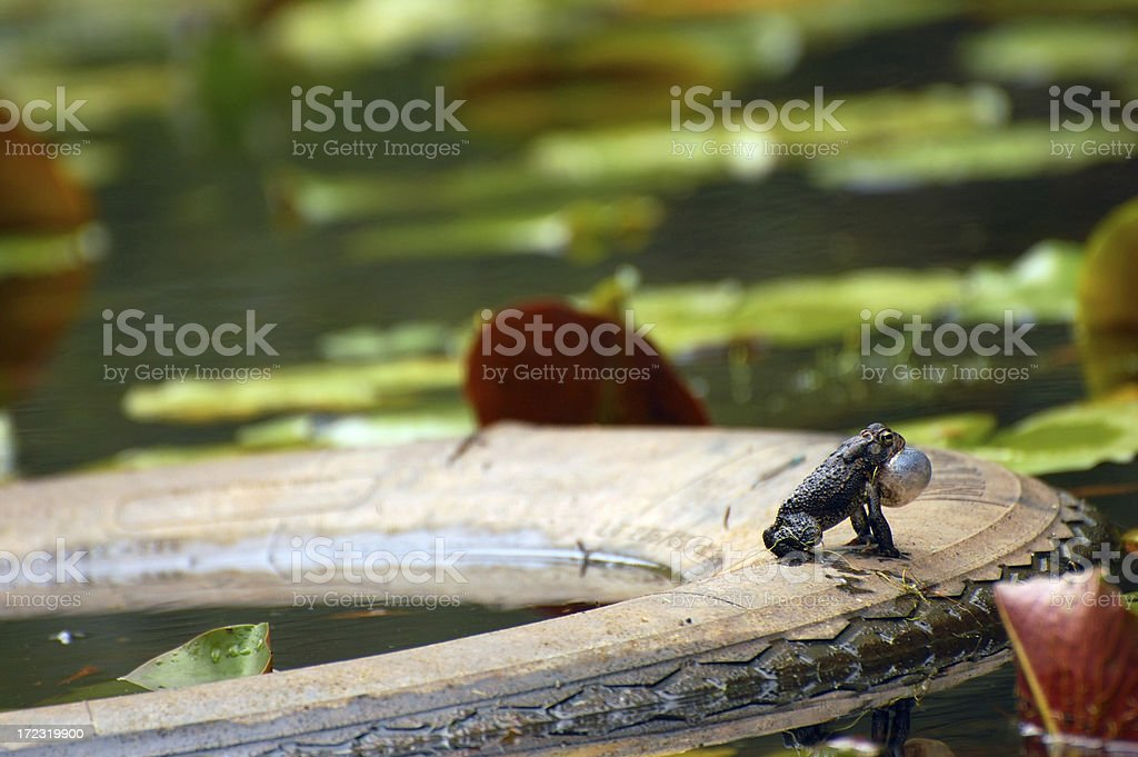 Calling Toad and Tire royalty-free stock photo