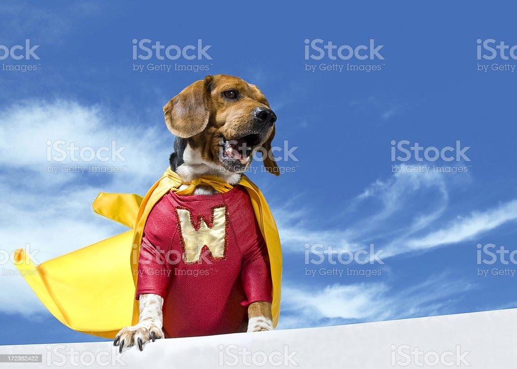 Calling WonderDog royalty-free stock photo
