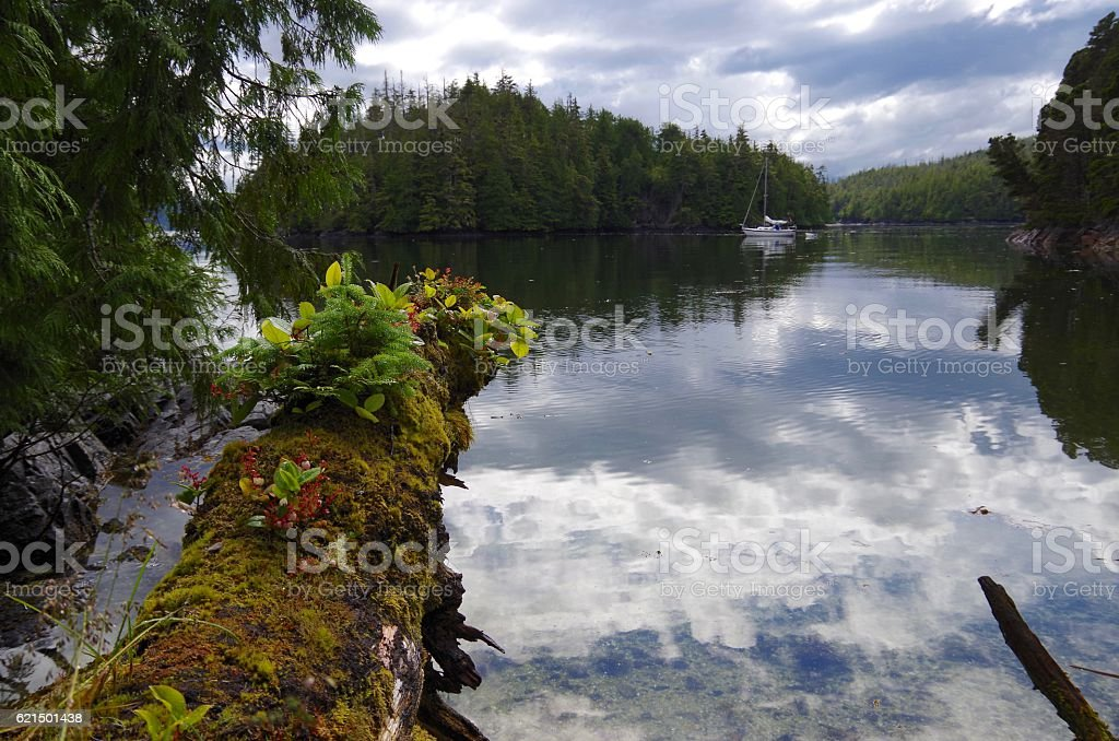 Calm anchorage in the islands of God's Pocket, British Columbia foto stock royalty-free