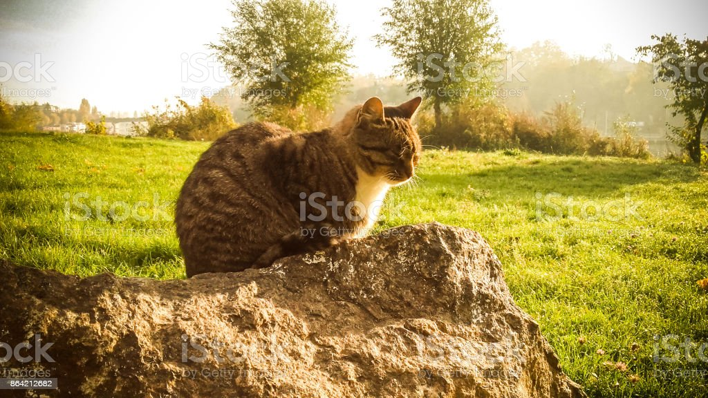 Calm cat sitting on warm stone royalty-free stock photo