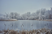 A calm, frozen pond with cattail in the foreground. Behind the water, a white frosted forest.