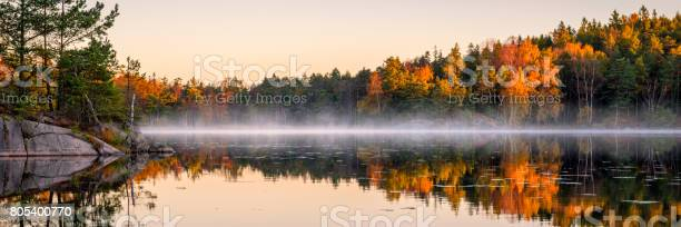 Photo of Calm lake in the forest