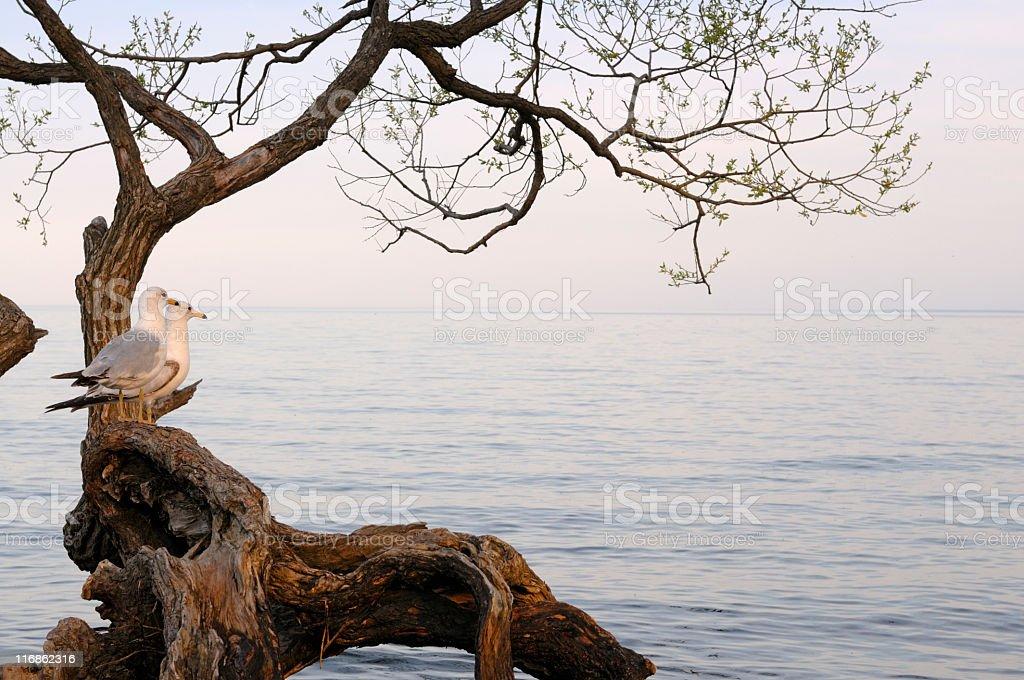 calm lake royalty-free stock photo
