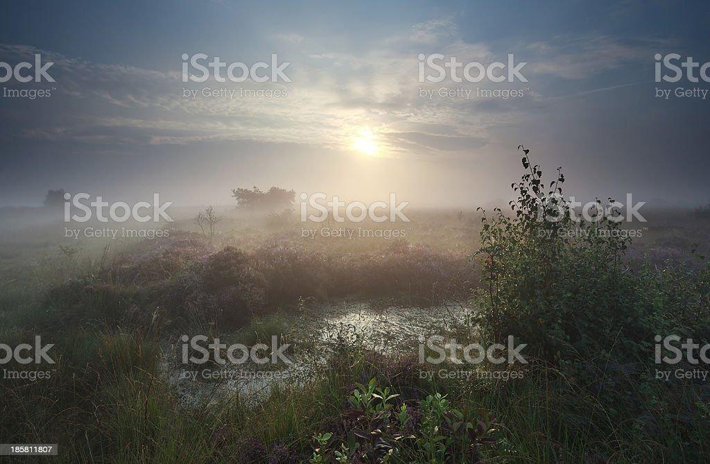 calm misty sunrise over marsh royalty-free stock photo