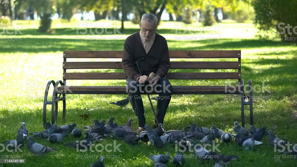 Calm old man sitting on bench in park and feeding pigeons, loneliness...