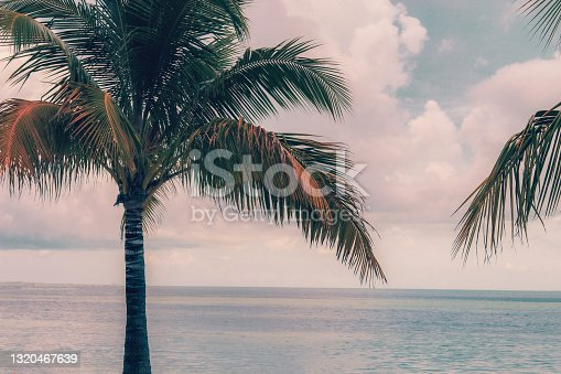 istock A Calm Palm Tree of the Caribbean 1320467639