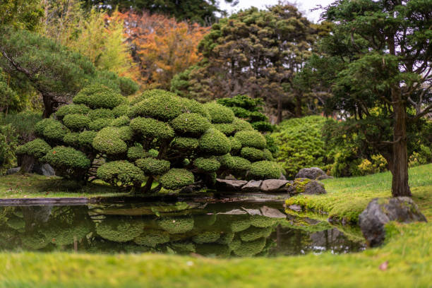 Calm picture of Japanese Tea Garden with green bushes reflecting in a pond. Golden Gate Park, San Francisco. stock photo