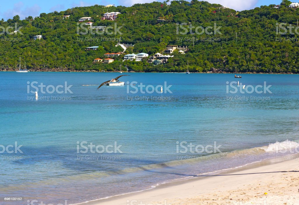 Calm sea surface with flying pelican at Magens Bay beach of St Thomas Island, US VI. stock photo