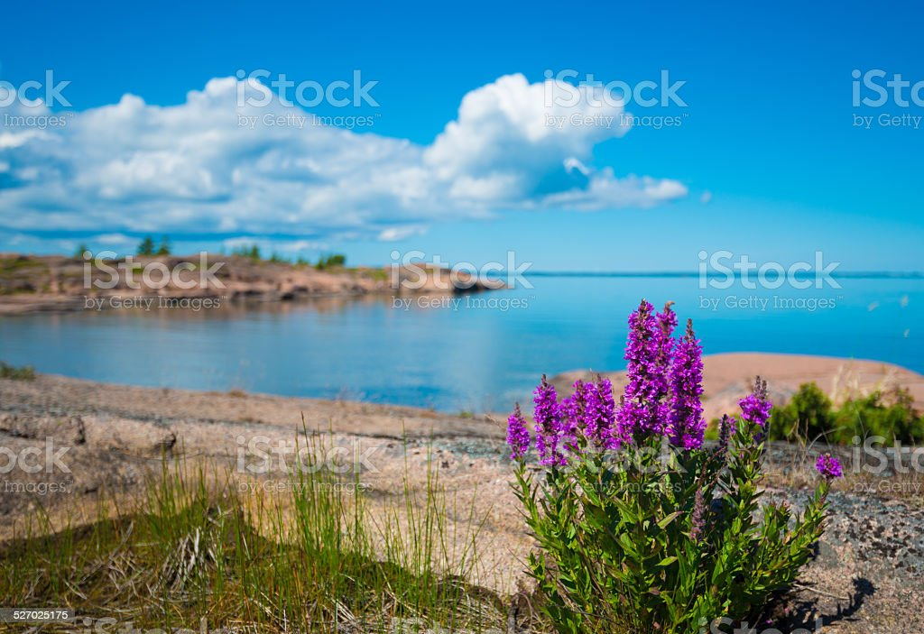 Calm Sunny Summer Day on Archipelago Island stock photo