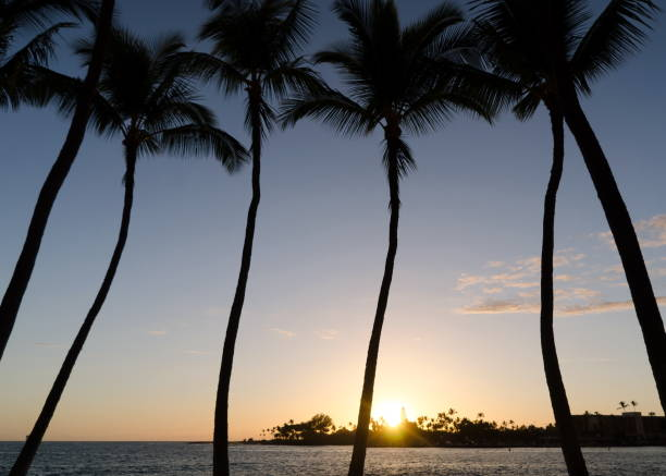 Calm warm colored  sunset behind palms in Kailua Bay, Big Island stock photo