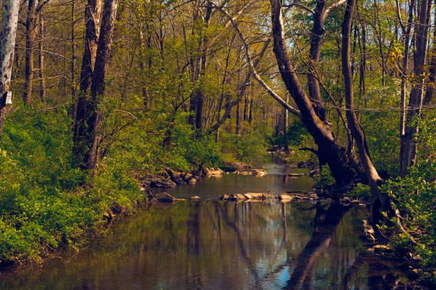 Calm Water stock photo