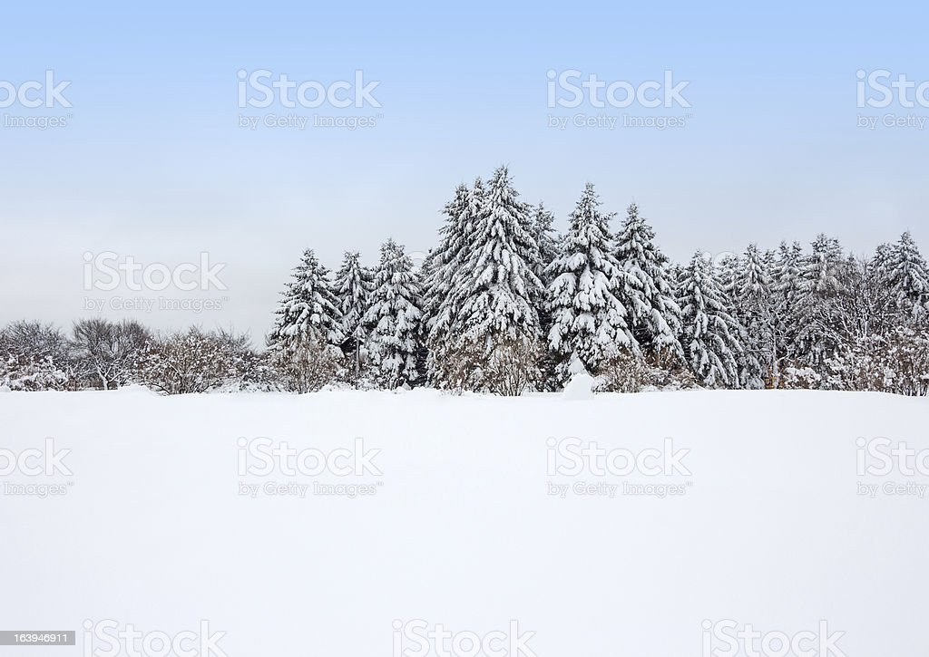 Calm winter forest after the snowstorm royalty-free stock photo