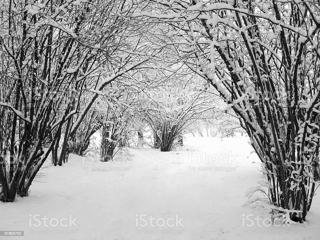 calm winter park scenery royalty-free stock photo