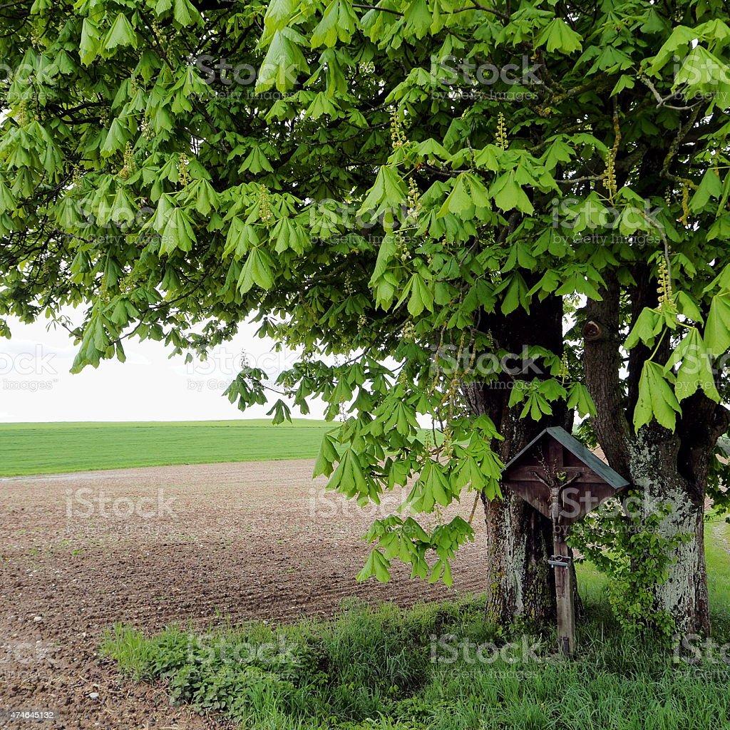 Calvary under chestnut trees stock photo
