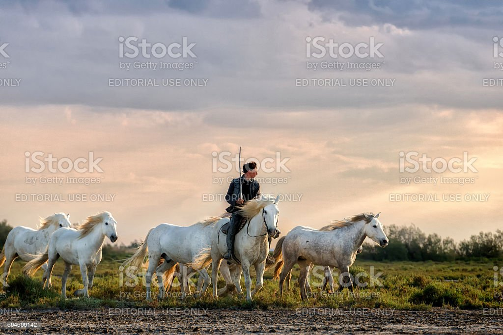 Camargue, cowboy and horses stock photo