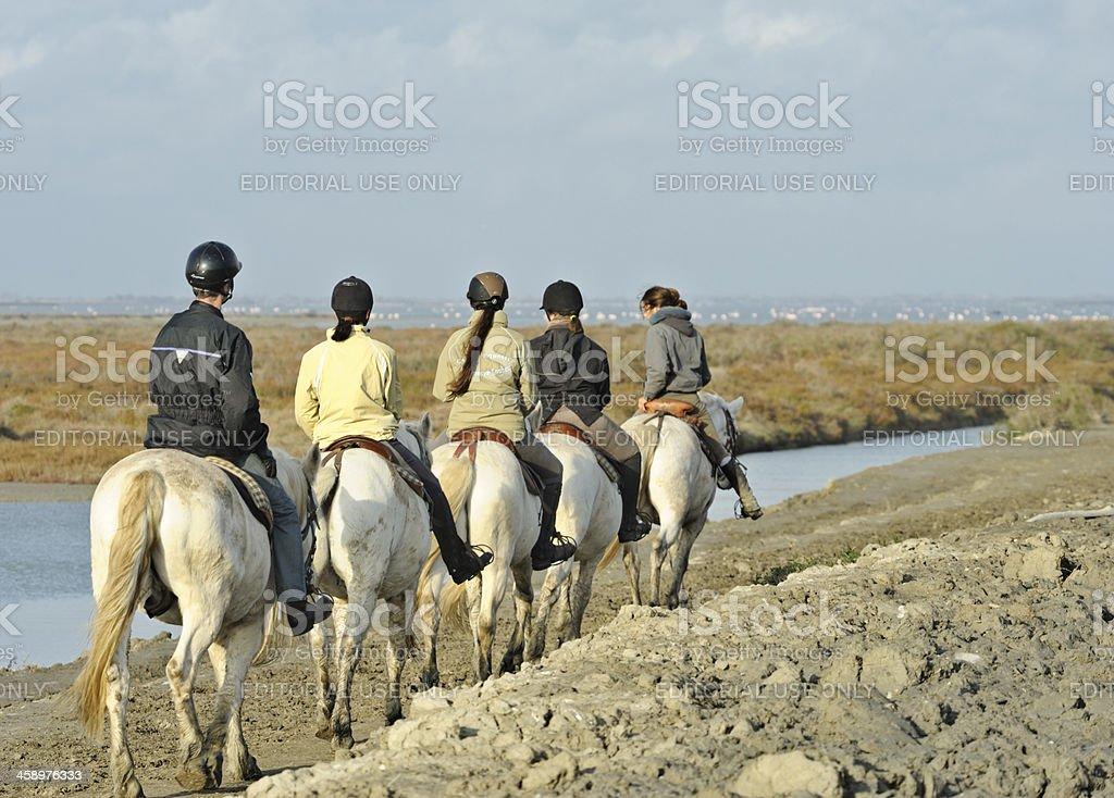 Camargue horses, France royalty-free stock photo
