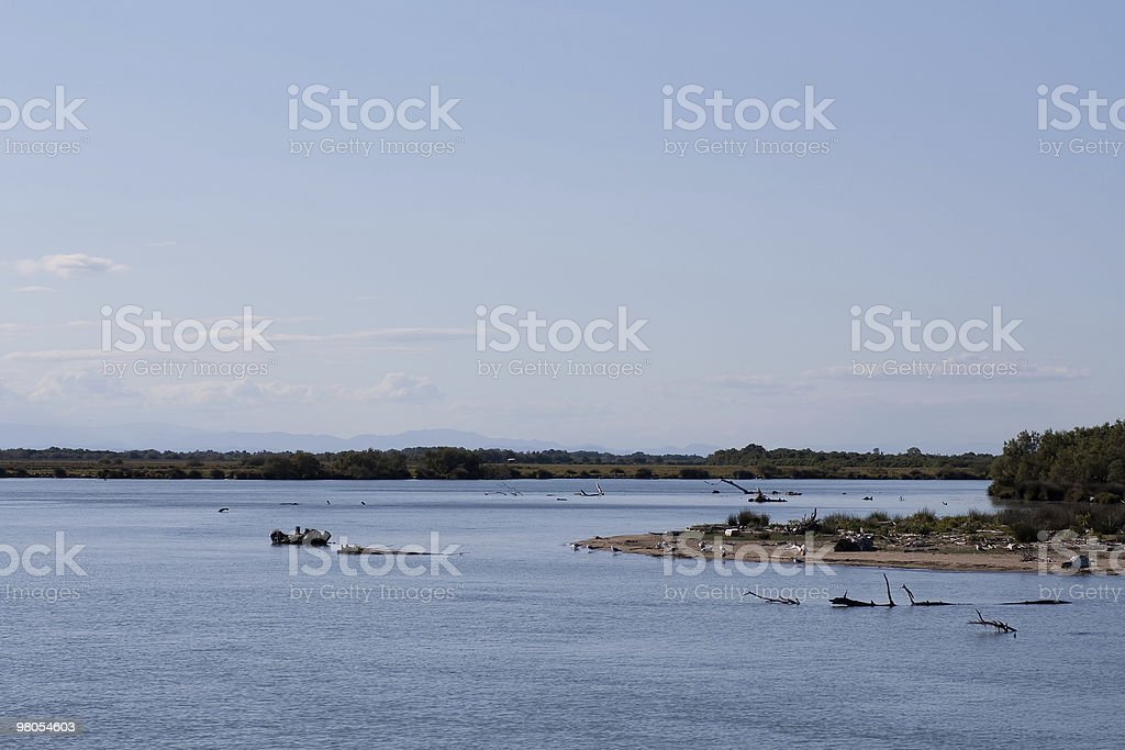 Camargue royalty-free stock photo
