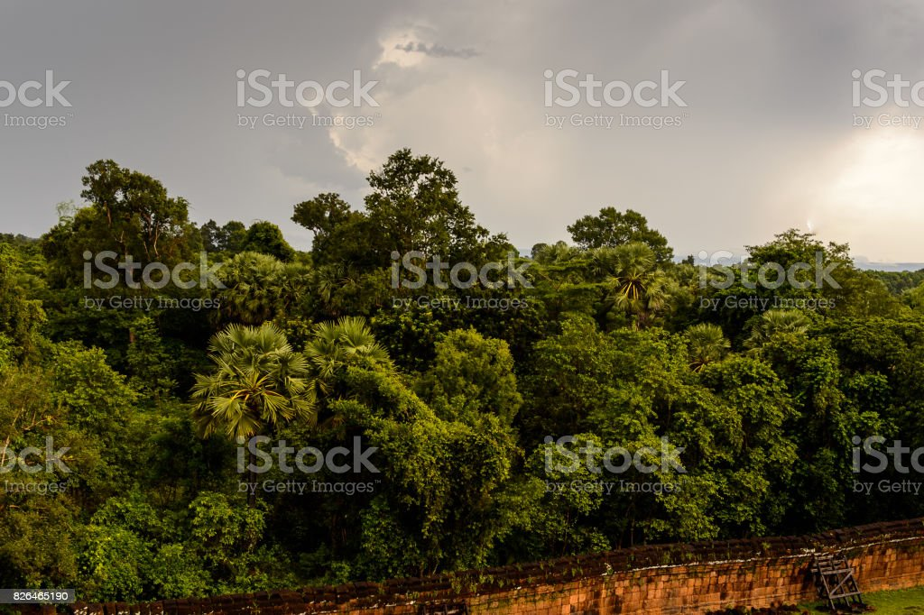 Cambodian Jungle near the Pre Rup, a temple at Angkor, Cambodia stock photo