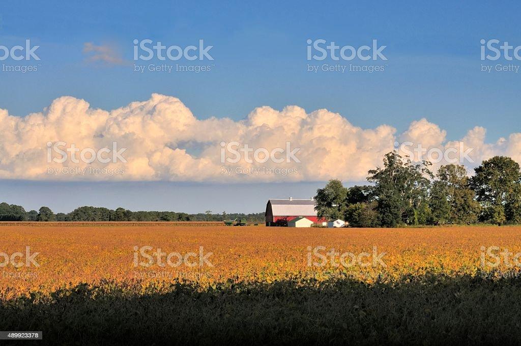 Cambridge Barn and Soybean Field stock photo