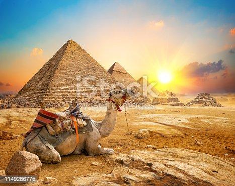 Camel in sandy desert near pyramids at sunset