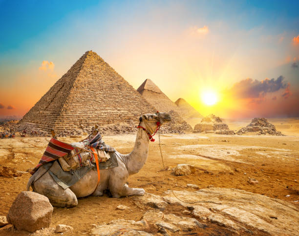 Kamel und Pyramiden – Foto