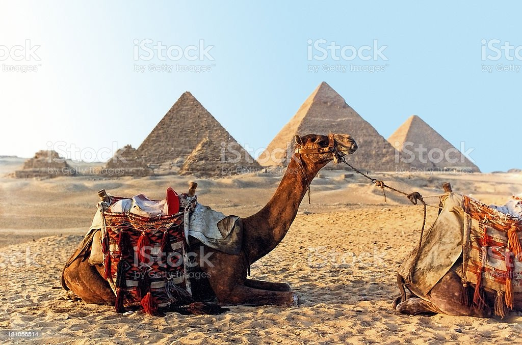 Camel and the Great Pyramids of Giza in Egypt stock photo