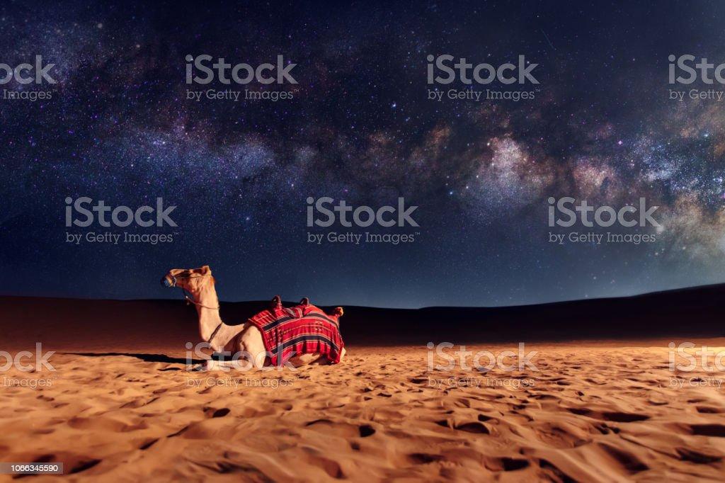 Kamel Tier sitzt auf der Sanddüne in der Wüste. Milchstraße und Sterne am Himmel - Lizenzfrei Arabeske Stock-Foto