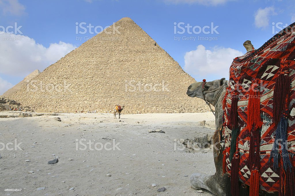 Camel at Giza royalty-free stock photo
