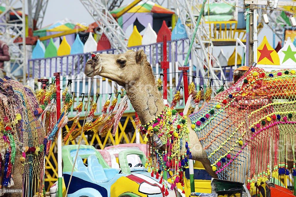Camel at Pushkar Fair stock photo