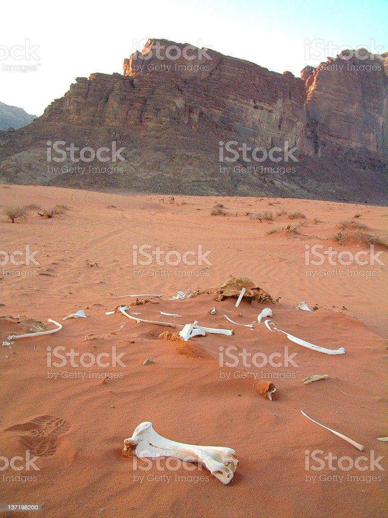 Camel bones, Wadi Rum, Jordan stock photo