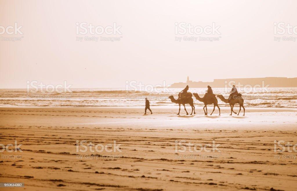 Caravana de camellos en la playa de Essaouira - foto de stock