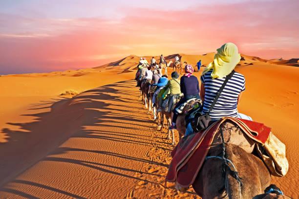 kamel-karawane durch die sanddünen in der sahara wüste, marokko bei sonnenuntergang gehen - sahara stock-fotos und bilder