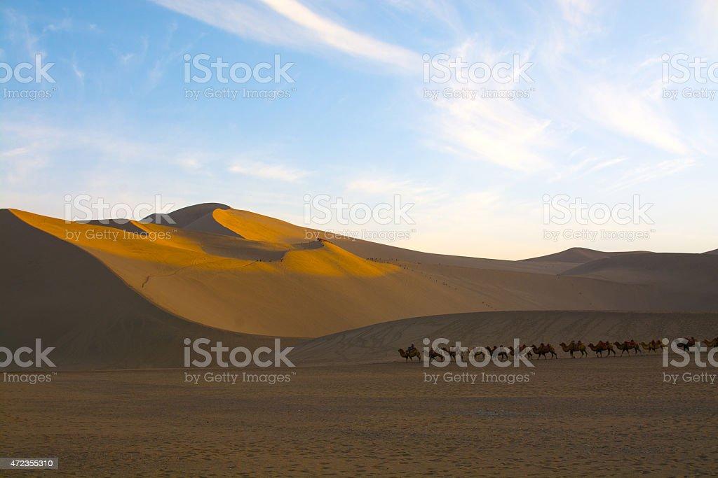 Camel caravan going through the sand dunes stock photo