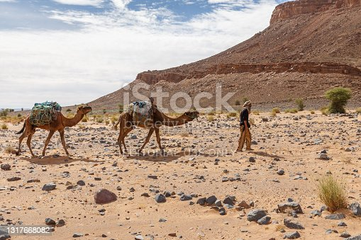 Errachidia Province, Morocco - October 22, 2015: Berber leads a camel caravan through the stony Sahara Desert in Morocco.
