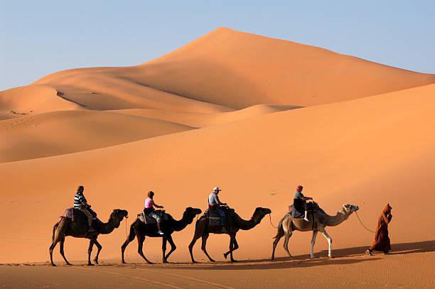 caravana de camellos en el desierto del sahara - camello fotografías e imágenes de stock