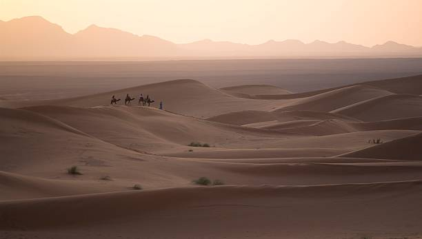 Camel Caravan in the Sahara stock photo