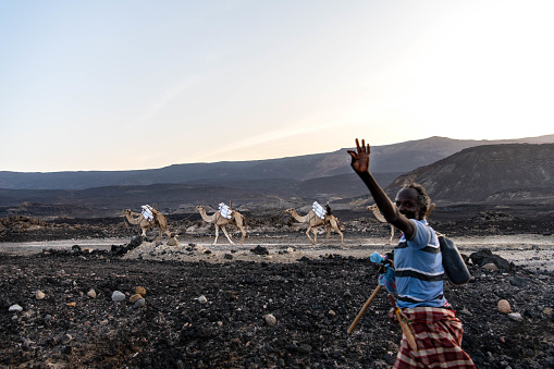 Africa, Djibouti, Lake Assal. A traditional camel caravan is leaving lake Assal fully loaded with salt. The nomadic cameleer says hi