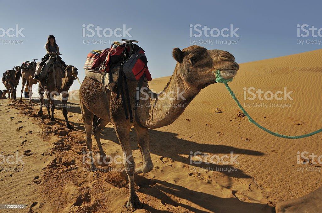 Camel caravan royalty-free stock photo