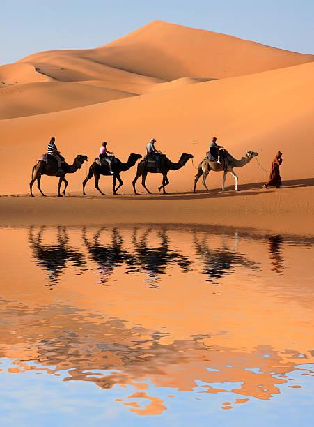 kamel karawane in der sahara - sahara stock-fotos und bilder