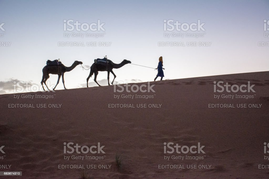 Camel Driver Heading Home With His Charge stock photo
