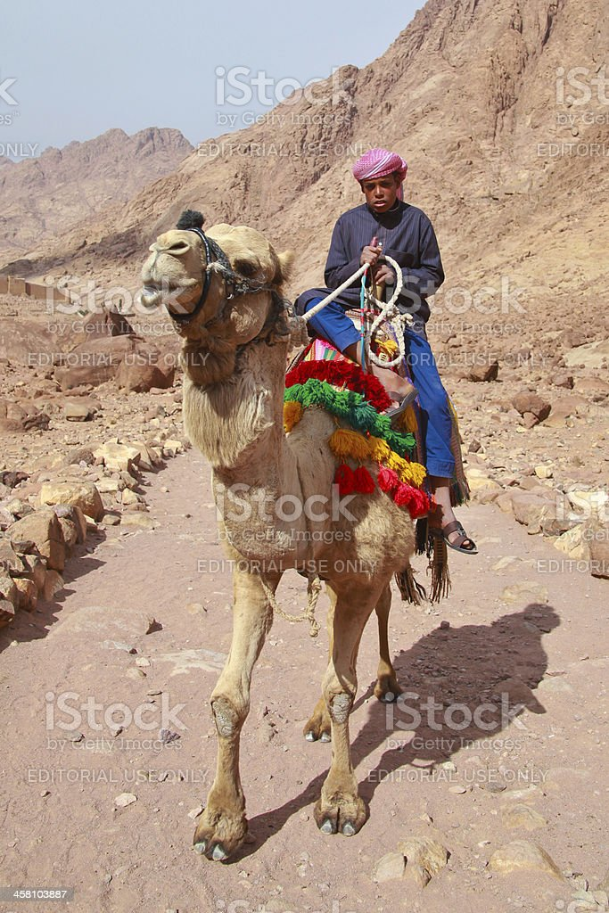 camel guide stock photo