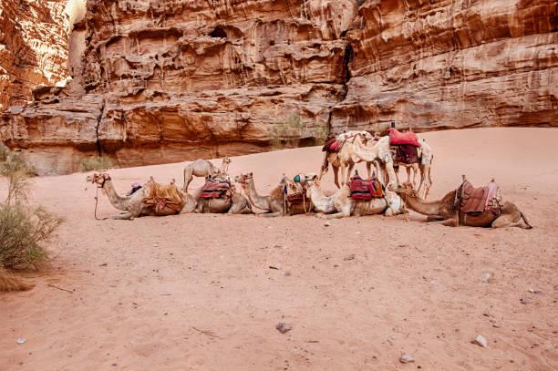 Kamel Herde unter den Klippen – Foto